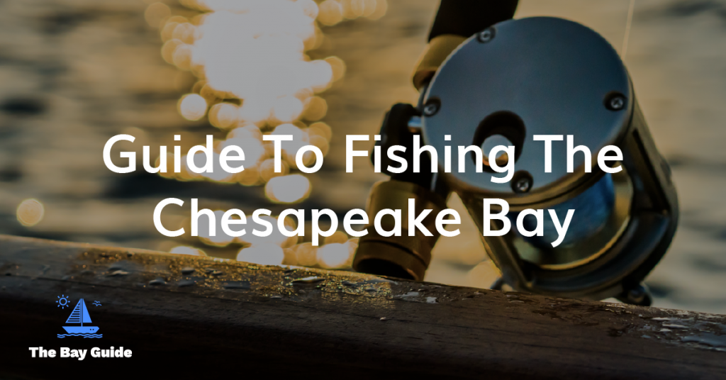 Chesapeake Bay Fishing